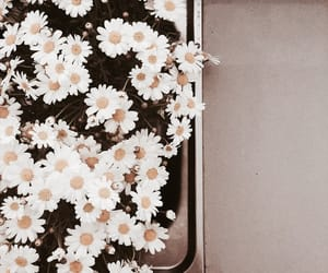 aesthetic, blossom, and photography image