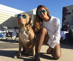 dog, sunglasses, and 13 reasons why image