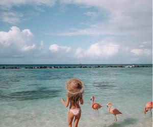 beach, flamingo, and girl image