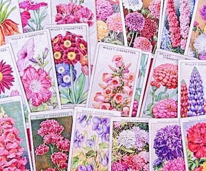 flowers, vintage, and gardening image