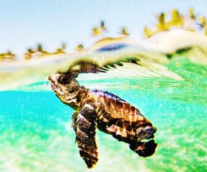 baby, clear, and sea turtle image