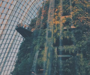 singapore, cloud forest, and aesthetic image