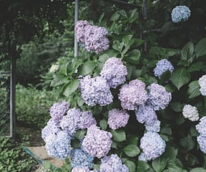 beautiful, girl, and hydrangea image
