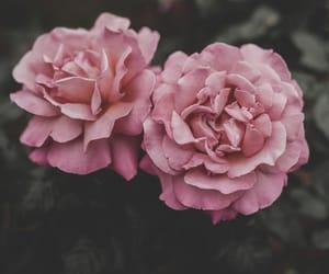 flores, fondo, and flowers image