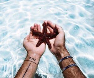 animal, sea, and summer image
