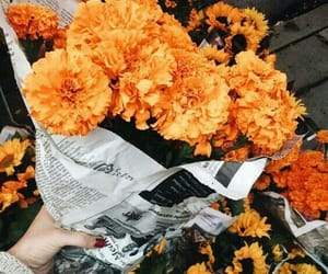 flowers, orange, and aesthetic image