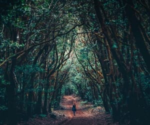 adventure, dreamy, and forest image
