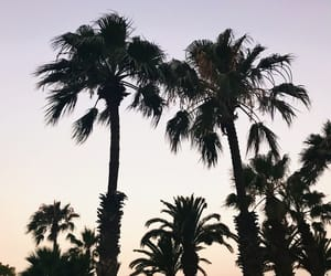 palmtrees, summer, and sunset image