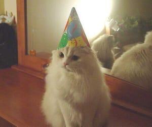 cat, white, and happy birthday image