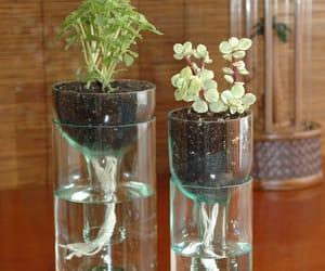plants, diy, and bottle image