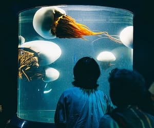 jellyfish, aquarium, and aesthetic image