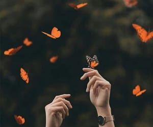 photography and butterfly image