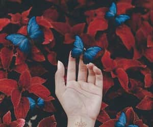 butterfly, blue, and red image