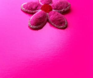 pink and fuschia image
