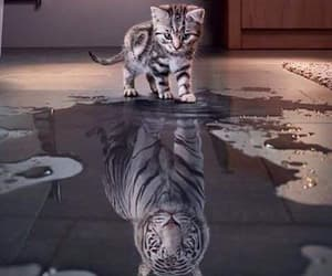 big, cat, and kitten image