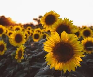 flowers, photographers on tumblr, and landscape image