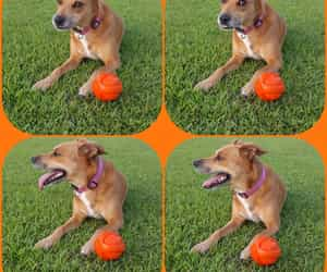 ball, orange, and Collage image