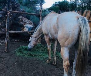 caballo, Vaqueros, and vaquera image