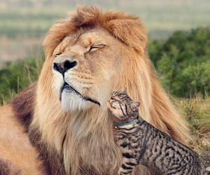 cat, lion, and love image
