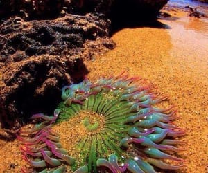 beach, anemone, and sea image