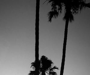 blackandwhite, evening, and palmtree image