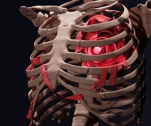 blue, bones, and heart image