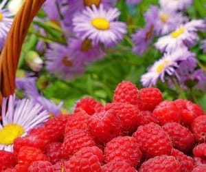 berries, flowers, and healthy image