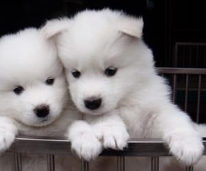 fluffy, cute, and hug image