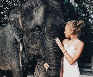 animal, elephant, and girl image