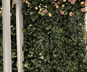 aesthetics, roses, and scene image