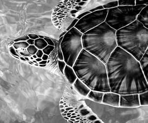 turtle, water, and animal image