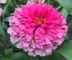 flower, summer, and pink image