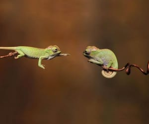 aesthetic, chameleon, and funny image