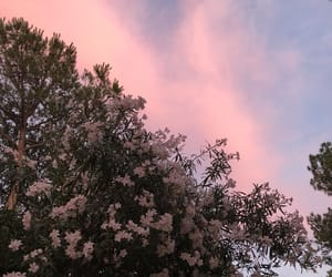 clouds, flowers, and sunset image