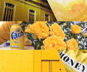 Collage, yellow roses, and fanta image
