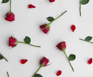 flowers, wallpaper, and roses image