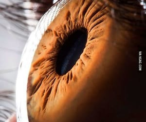 eye, yeux, and ojo image