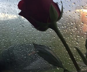 rose, rain, and red image