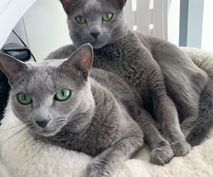 cat, cats, and green eyes image
