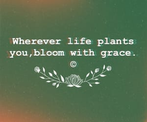 bloom, flower, and grace image