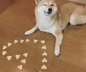 dog, love, and meme image