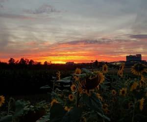 beautiful, evening, and sky image