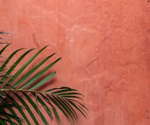 wallpaper, leaves, and wall image