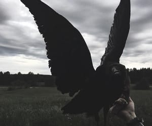 black, Darkness, and fly image