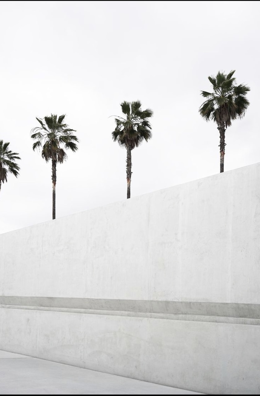 palm, white, and plamtrees image