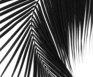 white and palm image
