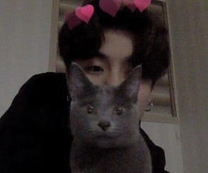 aesthetic, cat, and icon image