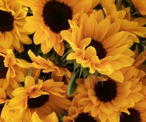 flowers, nature, and sunflowers image