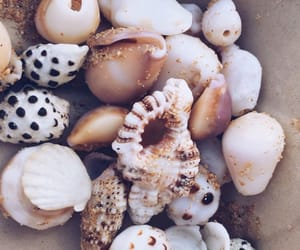 aesthetic, aesthetics, and seashells image