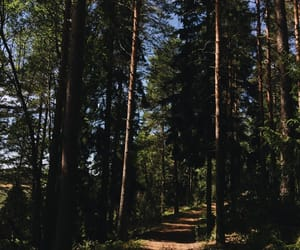 adventure, aesthetic, and forest image